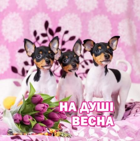 Оксана Васильева (ОксанаВасиль)